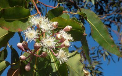 The Secret Lives of Native Australian Edible Plants